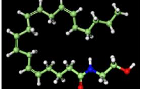 Anandamida-Molécula del mes